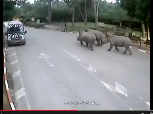 Rhino-Trio